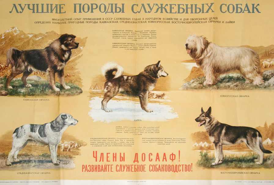 Служебные породы собак: лучшие виды таких питомцев