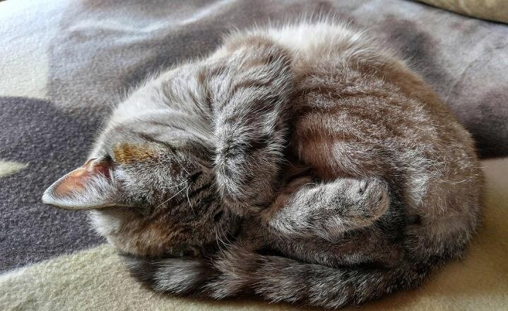 Зачем кошки закрывают морду лапкой во время сна?