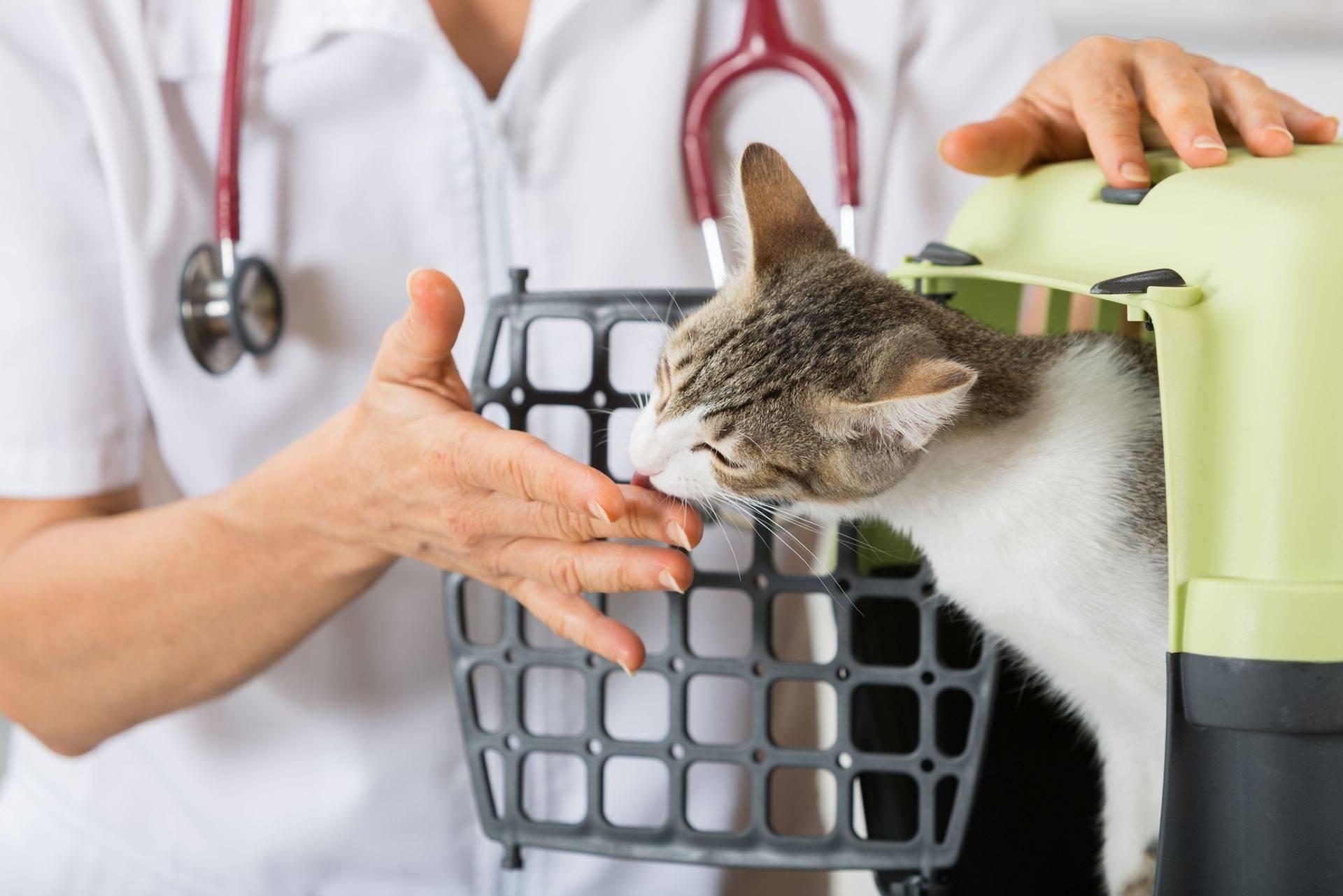 Каким кормом лучше кормить кошку: советы ветеринаров