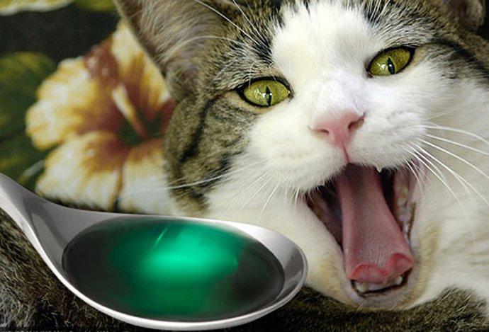 Что делать при отравлении кошки или кота?
