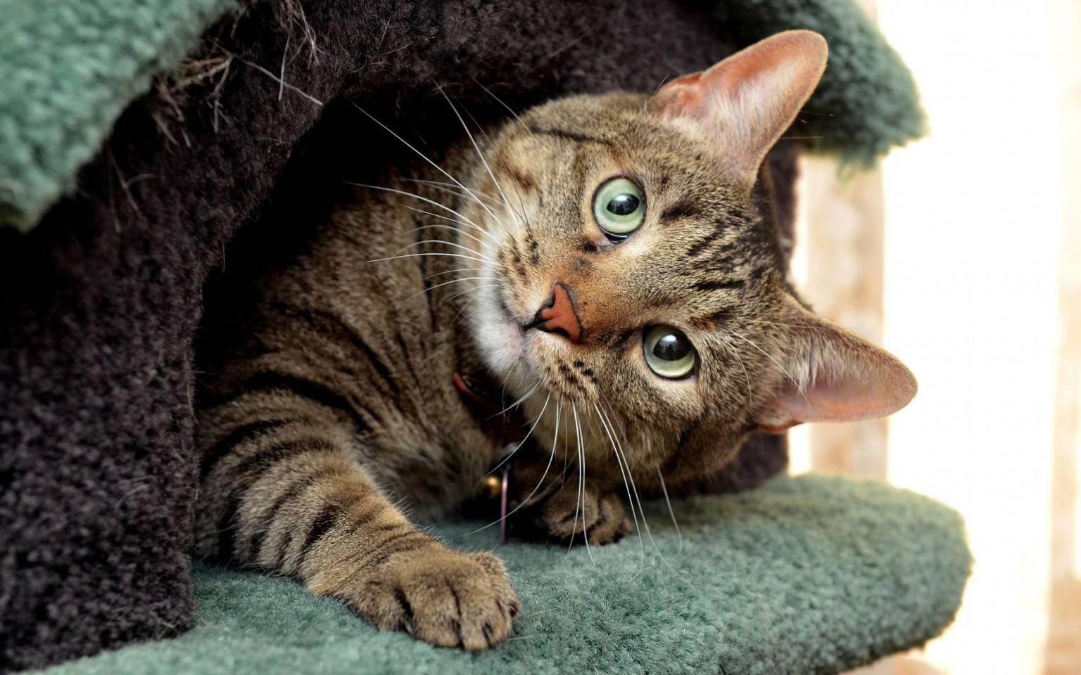 6 ошибок хозяина, которые сокращают жизнь кошки