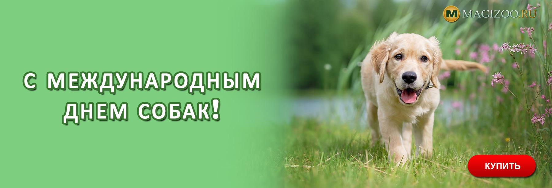 Международный день собак в России: какого числа