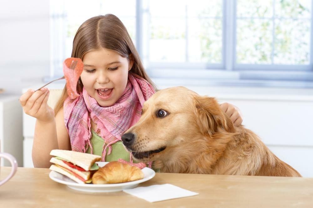 Почему нельзя кормить домашних питомцев со стола