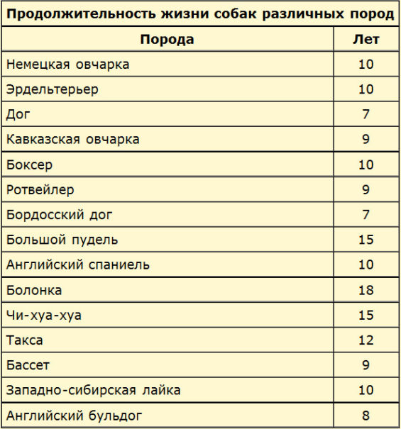 Сколько живут собаки в домашних условиях: таблица по породам