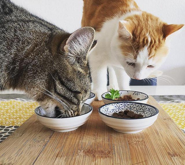 Почему стоит отучить кота от сухого корма и как правильно это сделать