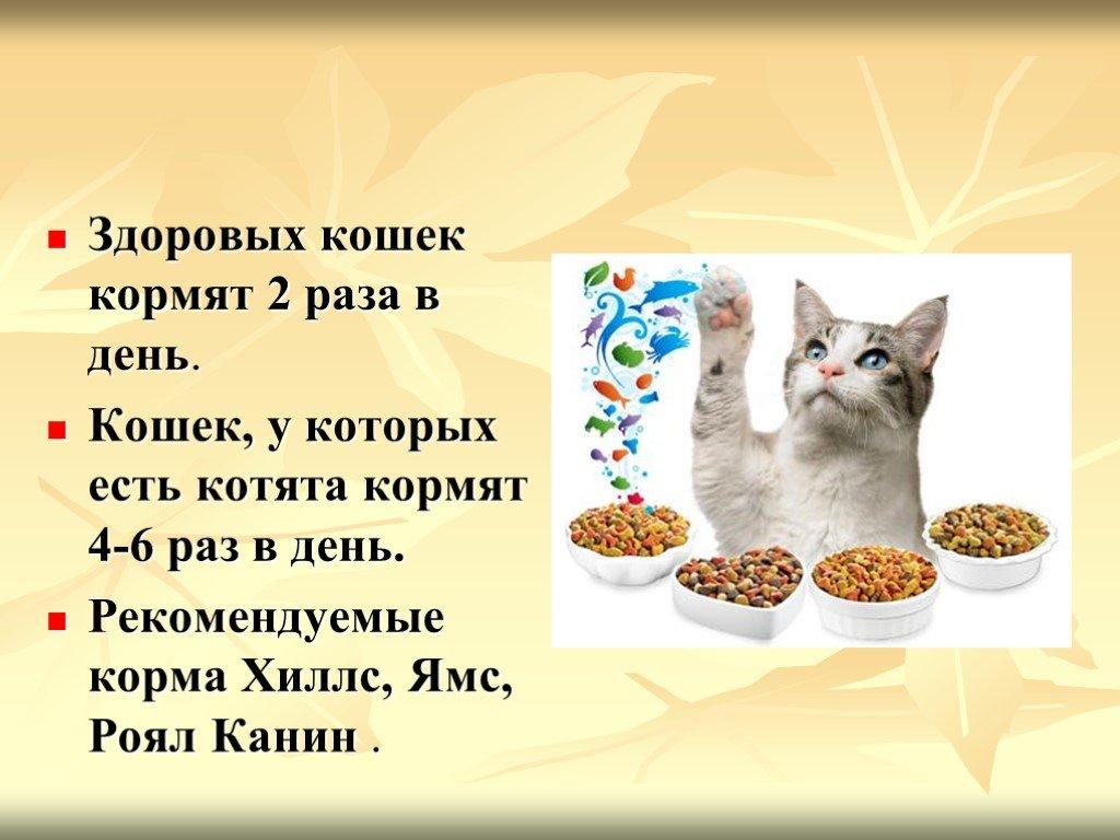 Чем кормить котенка: рацион питания для разных возрастов