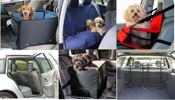 Собаку укачивает в автомобиле: причины, признаки и способы устранения