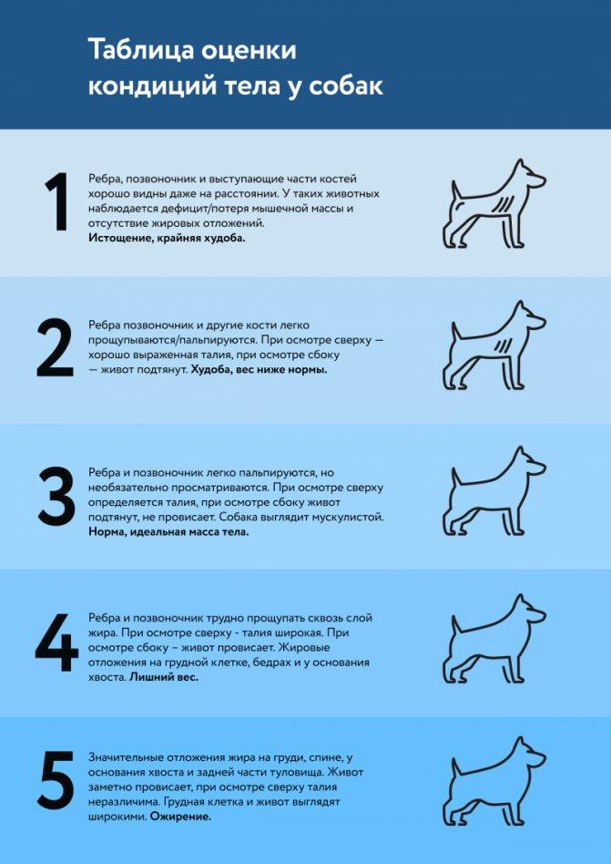 Пэт класс у собаки: что это такое, что значит брид
