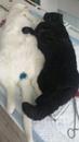Как ведет себя кошка после стерилизации