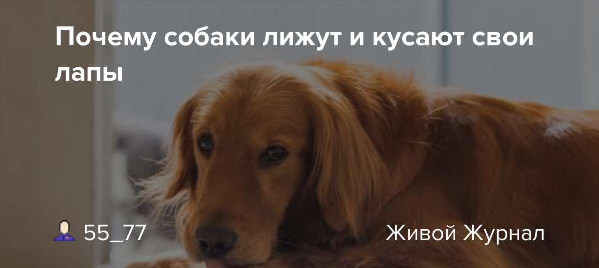 Собака постоянно облизывается и сглатывает