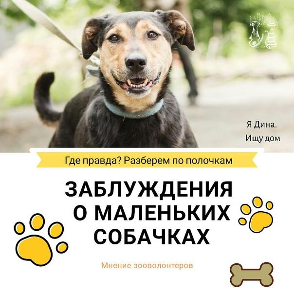 Мелкие породы собак