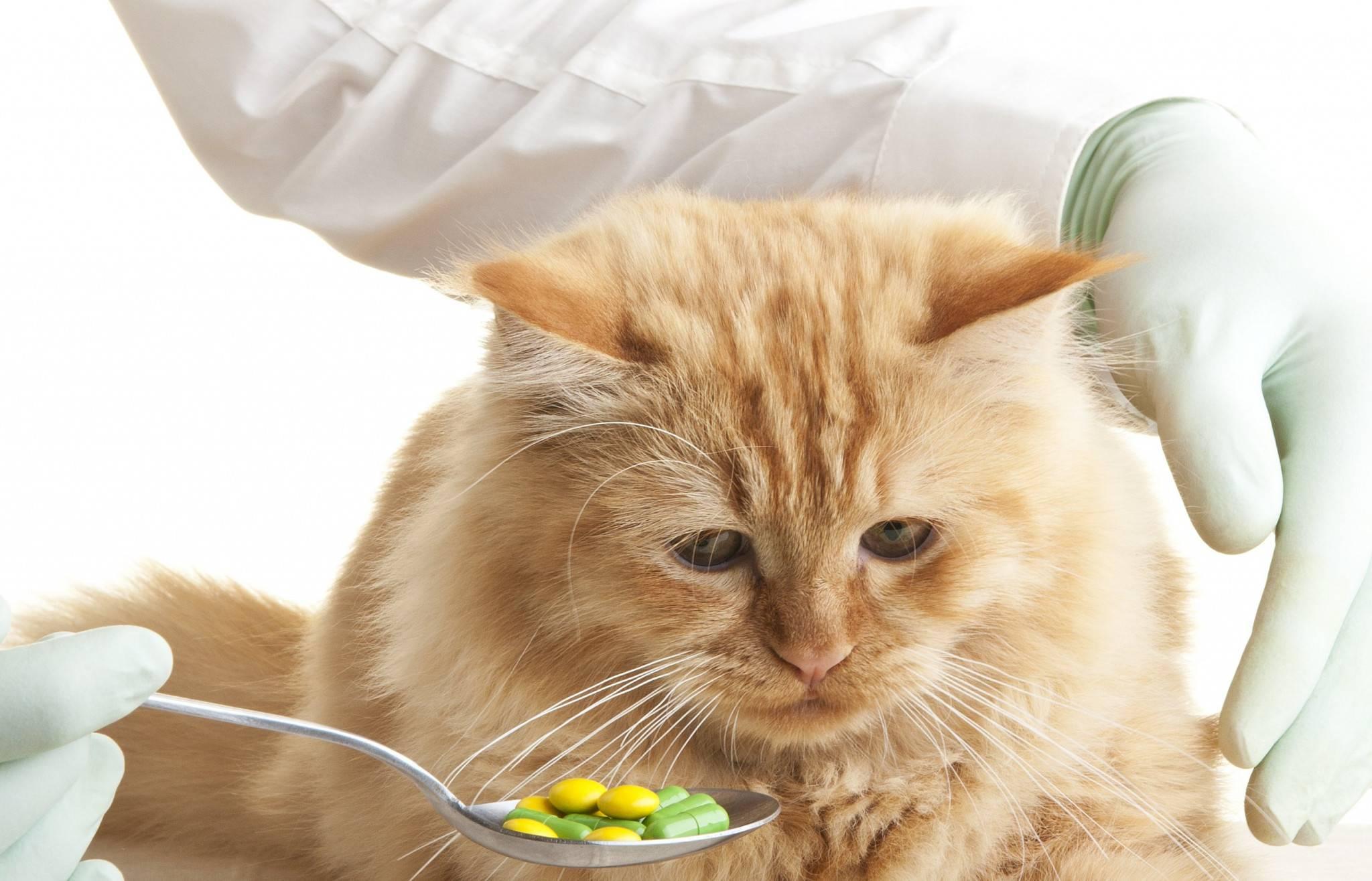Запор у кота: что делать в домашних условиях