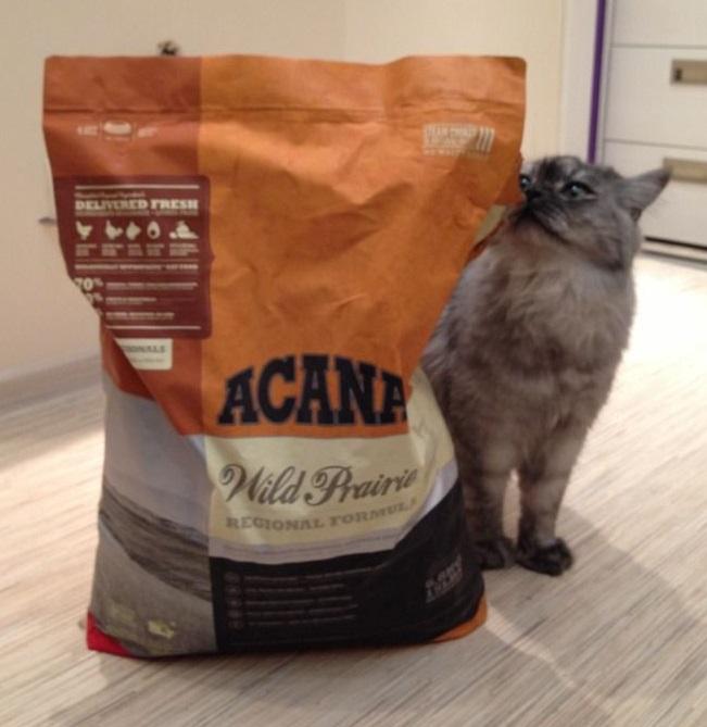 Полный обзор корма для кошек «Акана»