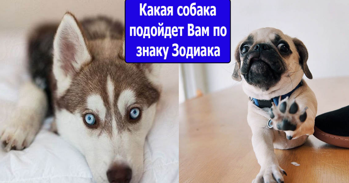 Какая собака подходит по знаку зодиака для человека