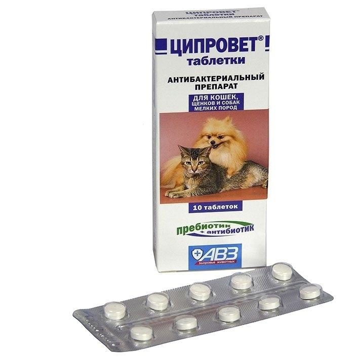 Препарат Кламоксил: лечение инфекционных заболеваний у кошек