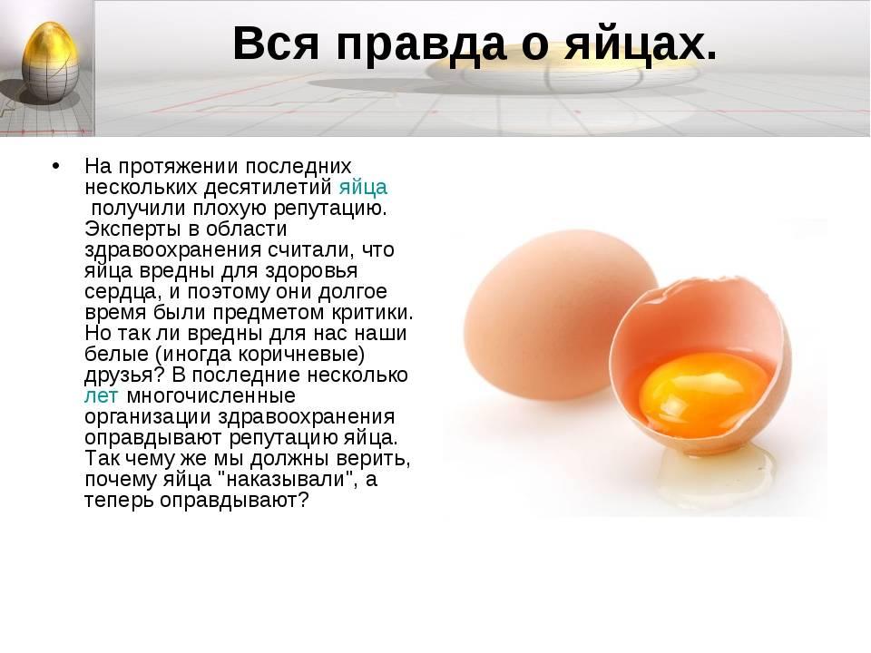 Можно ли собакам яйца: вареные и сырые, а также скорлупу