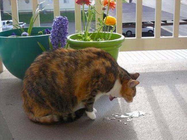 Зачем кошки едят траву на улице: можно ли разрешать