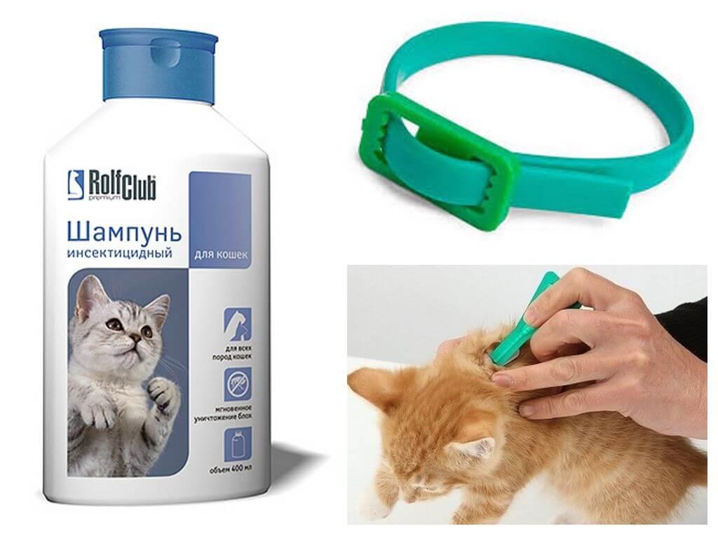Обзор лучших средств от блох для кошек