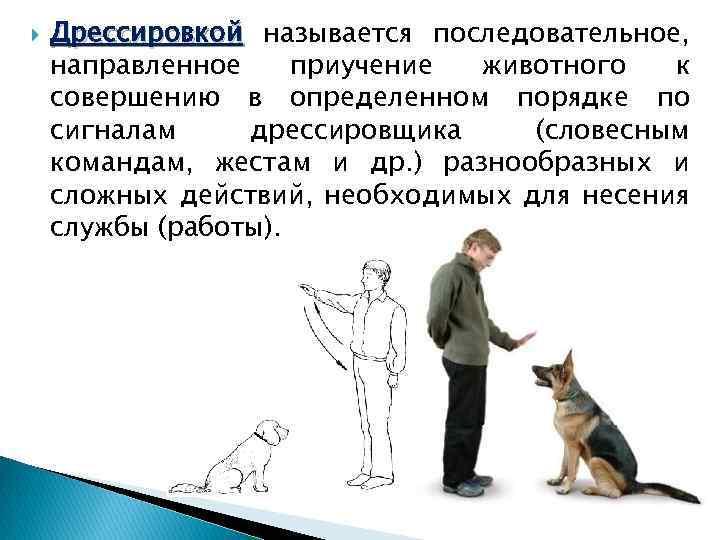 Как дрессировать взрослую собаку и научить командам