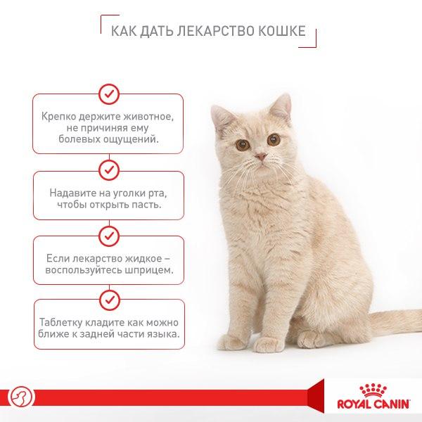Валерьянка для кошек: как действует, что будет