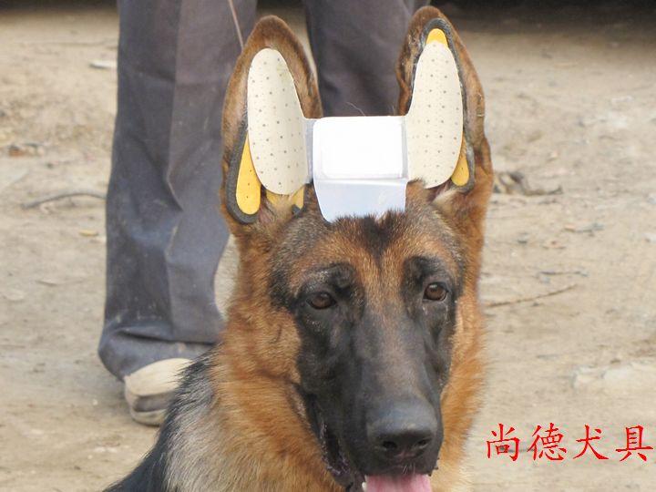 Особенности породы: когда встают уши у немецкой овчарки и что делать, если этого не произошло