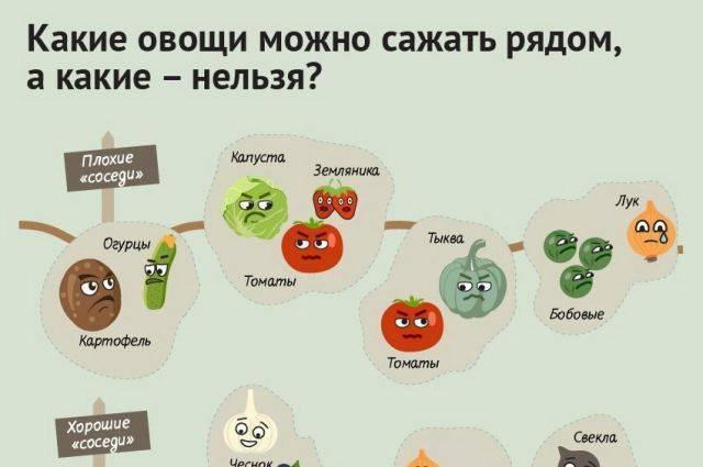 Можно ли собакам помидоры, огурцы, капусту и другие овощи