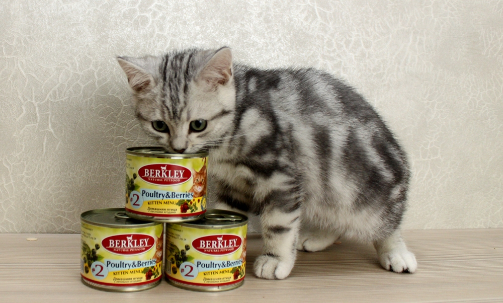 «Беркли» (корм для собак): консервы и сухое питание