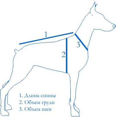 Размеры собак: как определить габариты для одежды