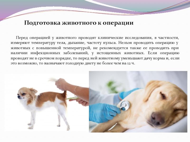 Особенности УЗИ кошек и собак