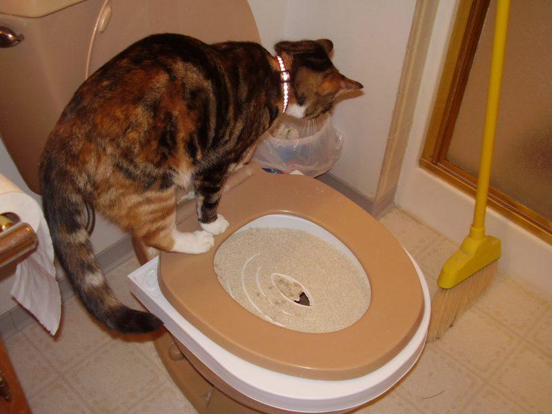 Кошка часто ходит в туалет по-маленькому по чуть-чуть