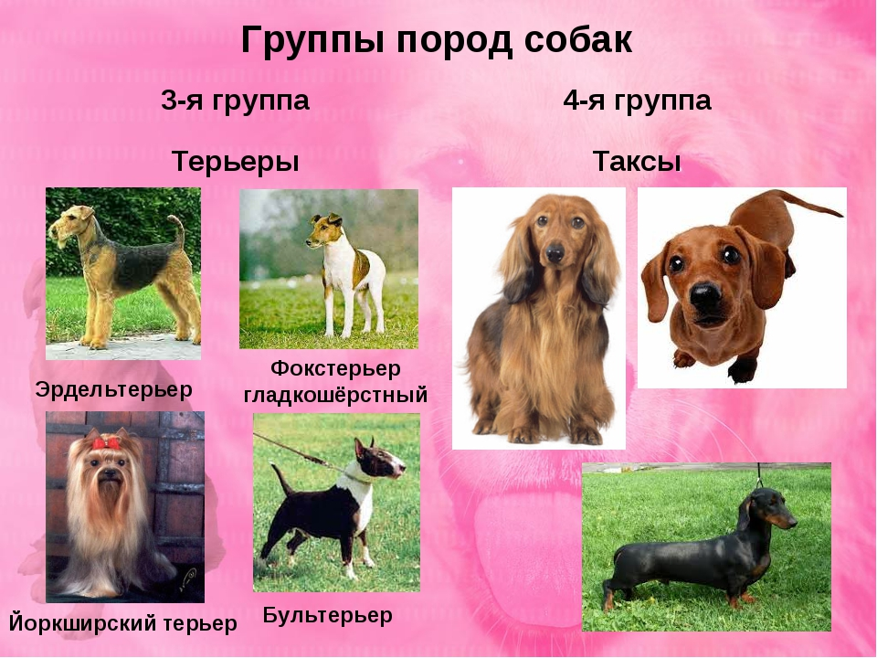 Все породы собак