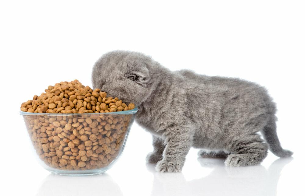 Можно ли кормить кошку и сухим и влажным кормом одновременно: примеры смешивания