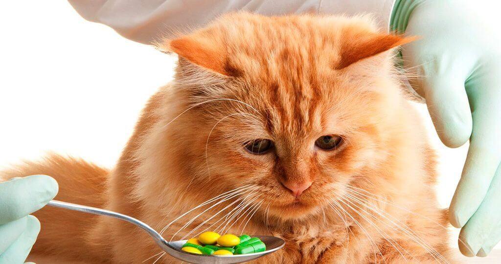 Отравление у кошки: признаки и первая помощь
