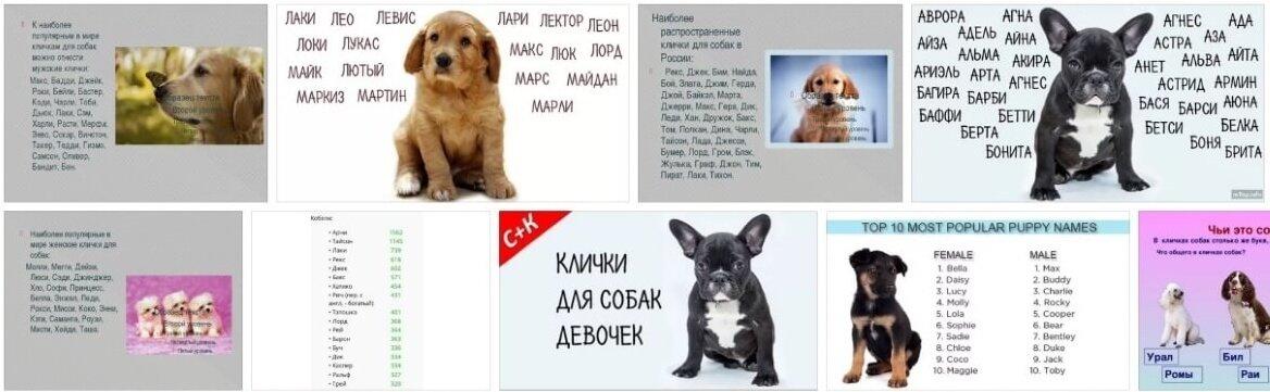Английские клички для собак мальчиков и девочек