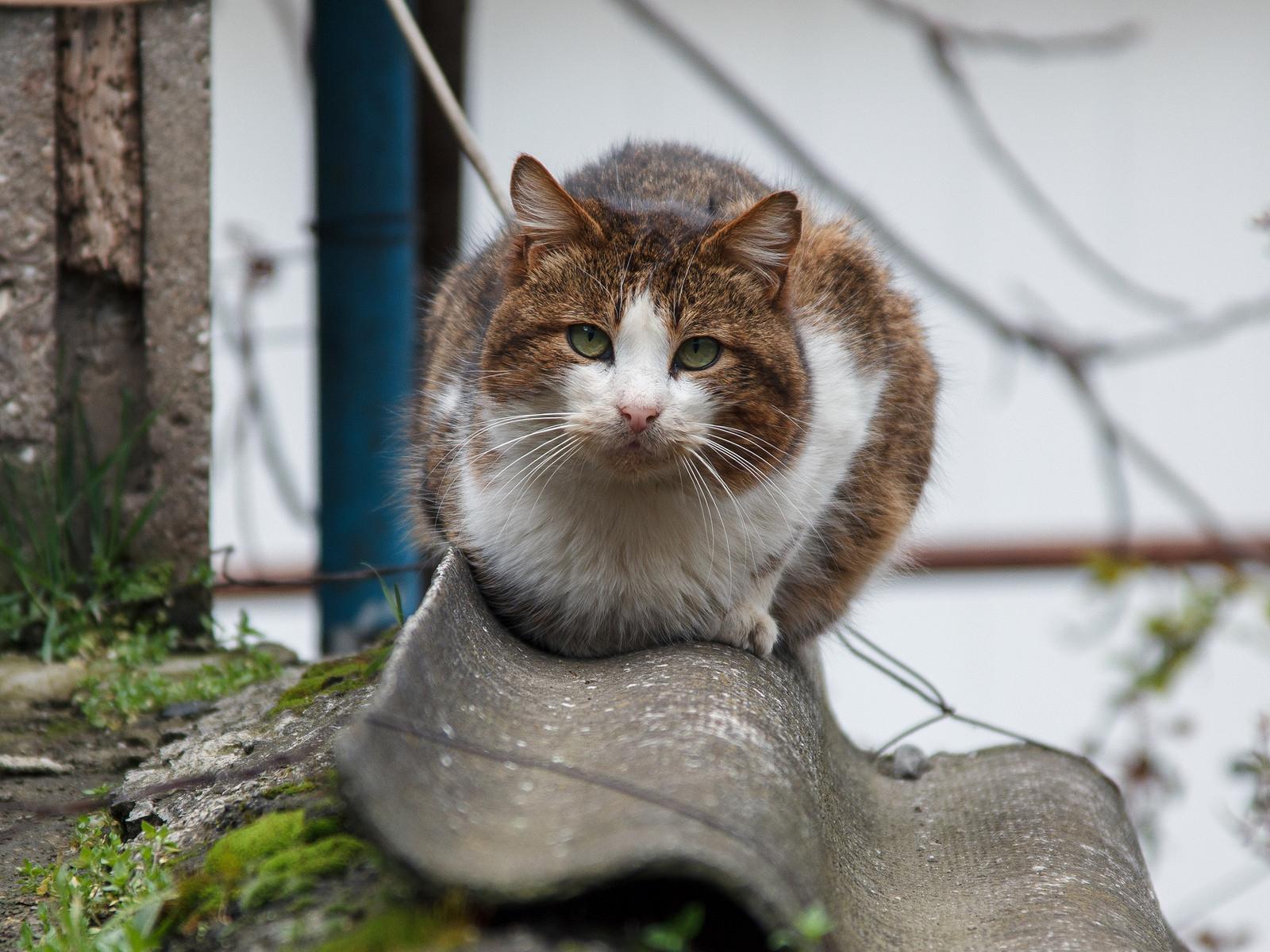 Чем уличный кот отличается от домашнего