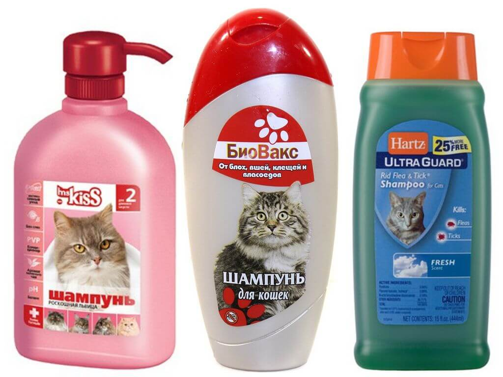 Шампунь от блох для кошек и котят: какой лучше