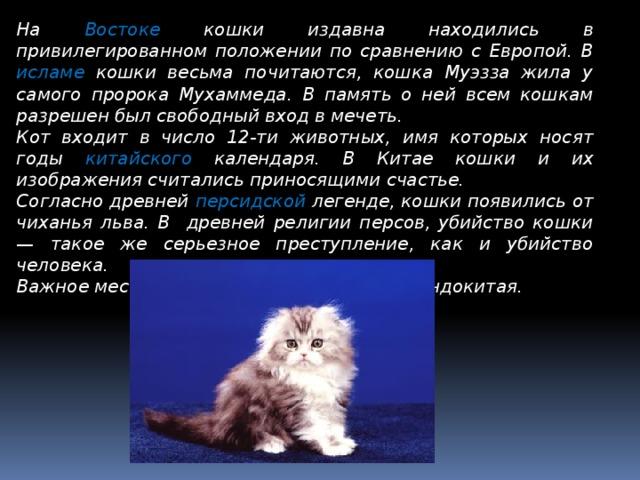 К чему снятся кошки и котята — сонник