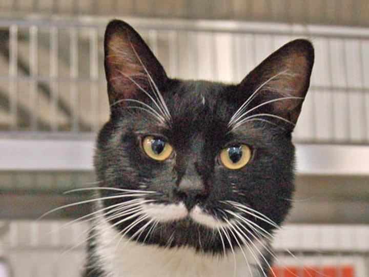 Зачем кошкам усы: основные функции и как называются по-научному