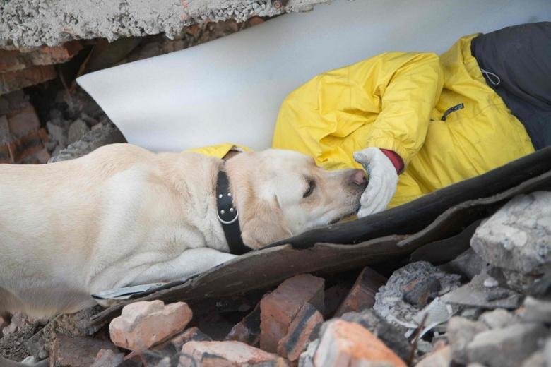 Какие собаки помогают спасать альпинистов: порода