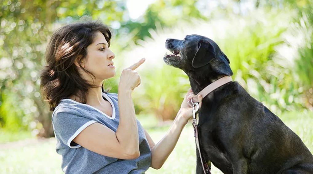Ученые придумали как дрессировать собак с помощью вибраций