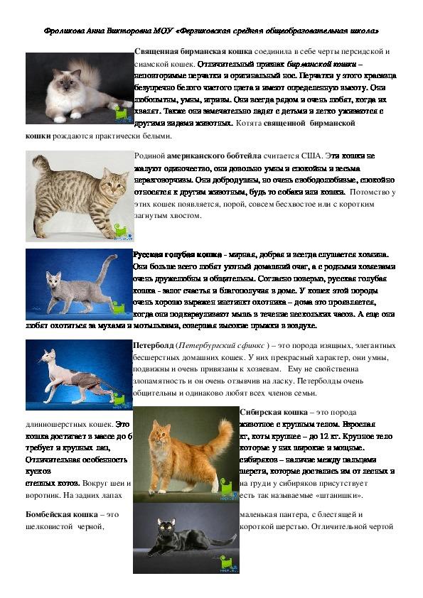 Сибирская кошка: новый взгляд на давнюю знакомую