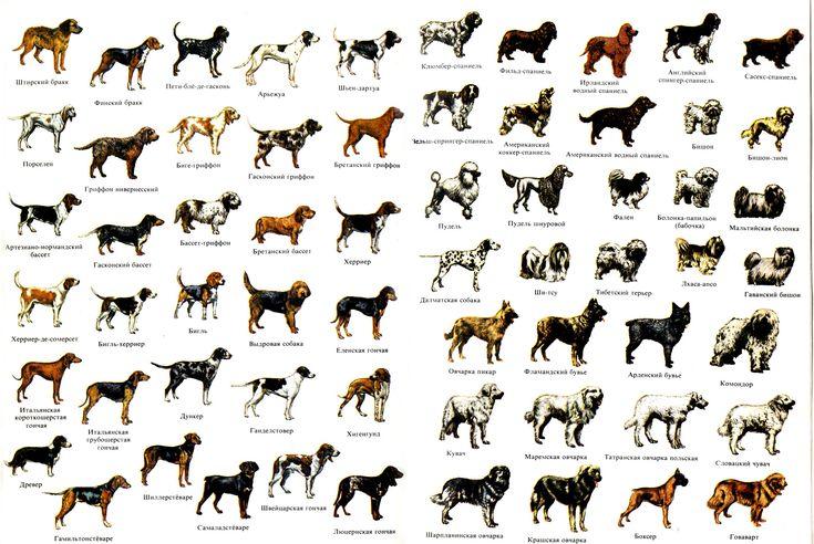 Терьеры: все породы, какие бывают разновидности