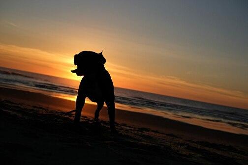 Самые редкие породы собак: топ-10