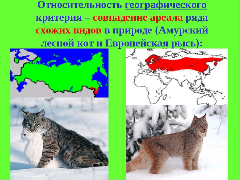 Пампасская кошка — прекрасна, но опасна