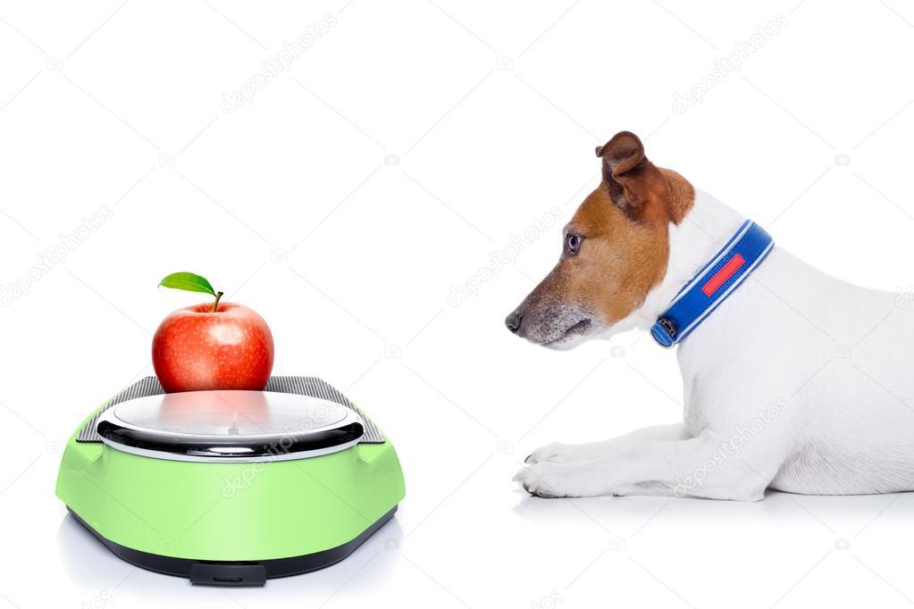 Как похудеть собаке: корма и диета при ожирении