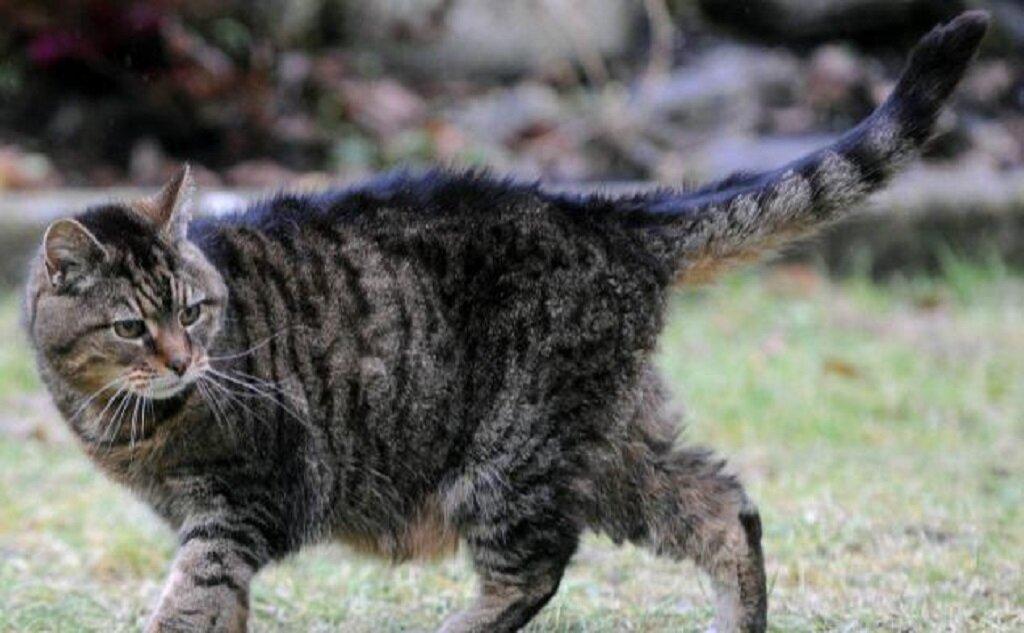 Сколько живут коты: рейтинг котов долгожителей