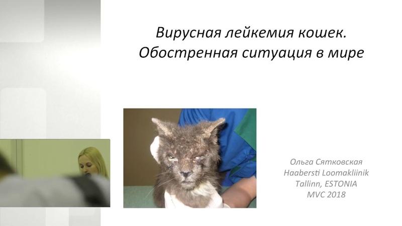 Лейкемия у кошек и котов: лечение, симптомы