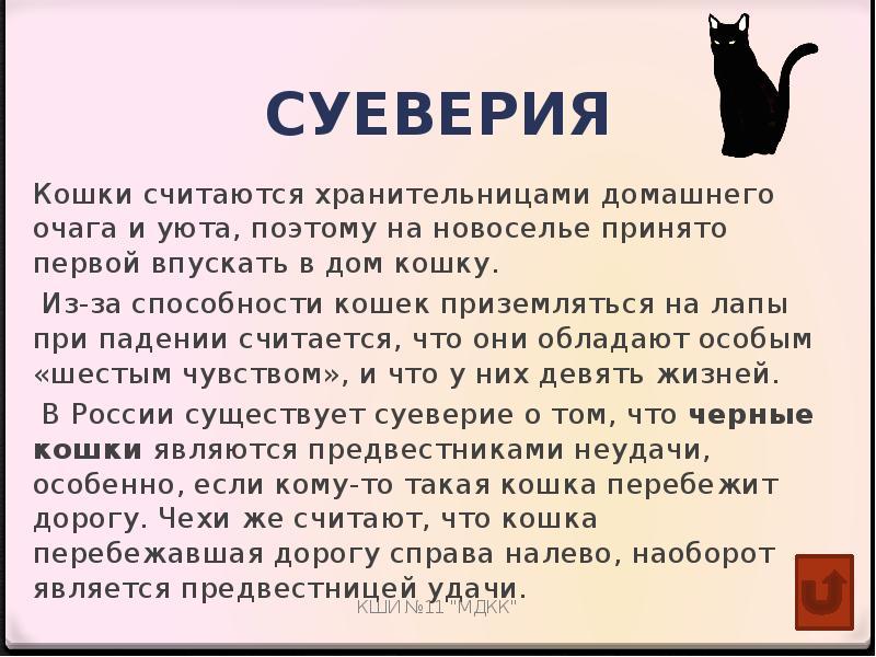 Котик — тёпленький животик: почему кошки спят на нас