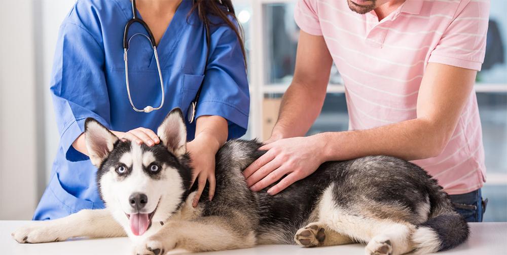 Собаки и кошки лечат людей