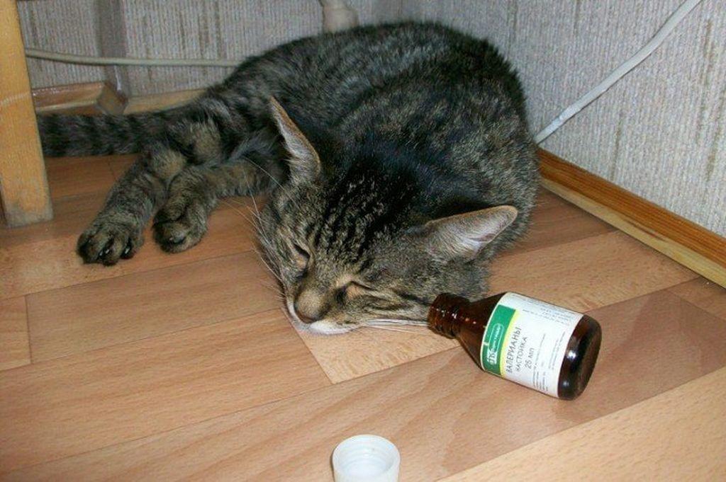 Коты и валериана: подробности непростых отношений